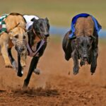 The best horse races and greyhound races to look forward to in October